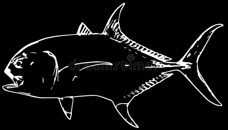 Jack crevalle fish predator on black background. Jack crevalle jack is a powerful, predatory fish that feeds on a variety of small fish stock illustration