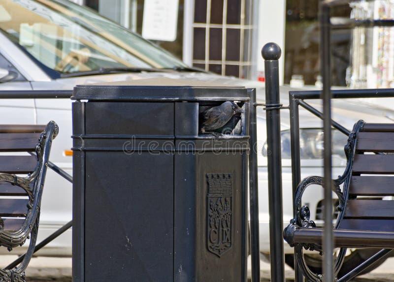 Jack-daw, das in einem überschüssigen Behälter des Eisens sitzt stockbilder