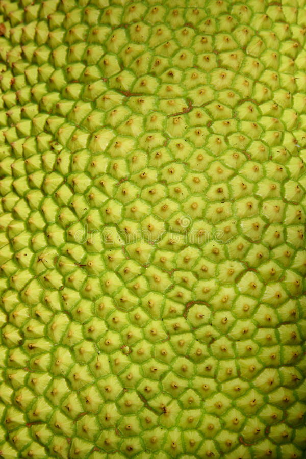 Jack-Fruchtbeschaffenheit stockbilder
