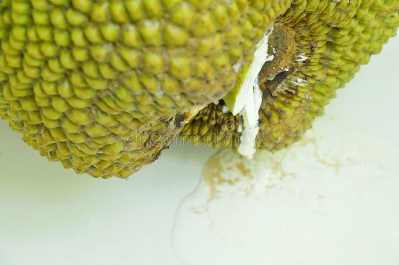 Jack-Fruchtgummi, der vom Kelch fällt auf Fliesenboden fließt lizenzfreie stockfotografie