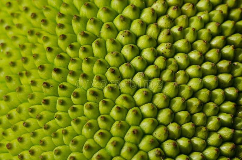 Jack-Fruchthaut tecture Hintergrund für Tapete stockbild