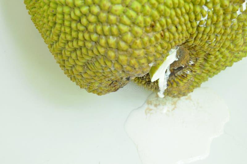 Jack-Fruchtrosine, die vom Kelch fällt auf Fliesenboden fließt lizenzfreie stockfotos