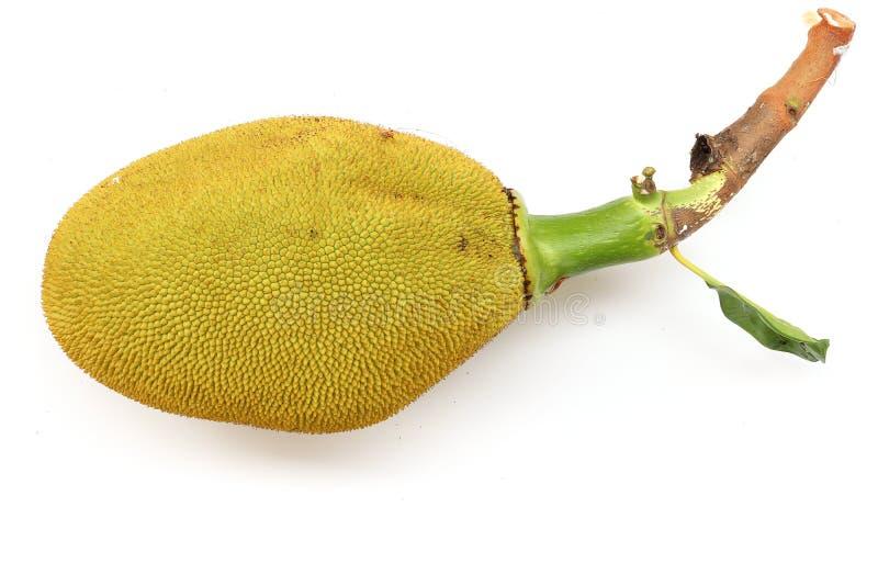 Jack fruit with leaf isolated on white background stock photography