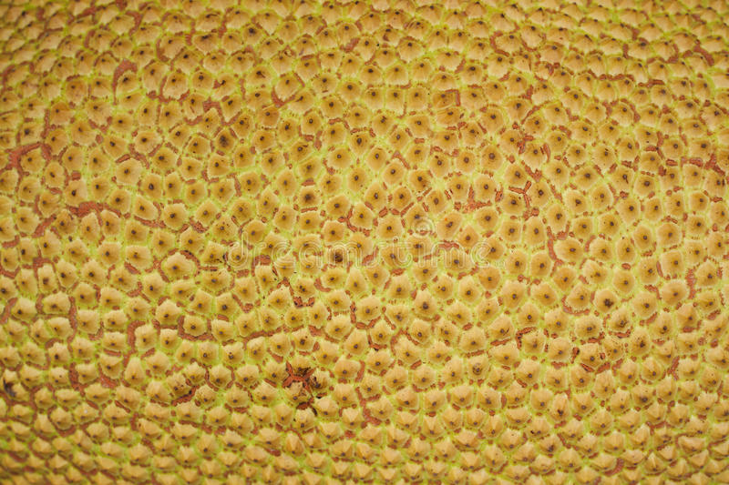 Download Jack Fruit Texture Royalty Free Stock Photo - Image: 25094065