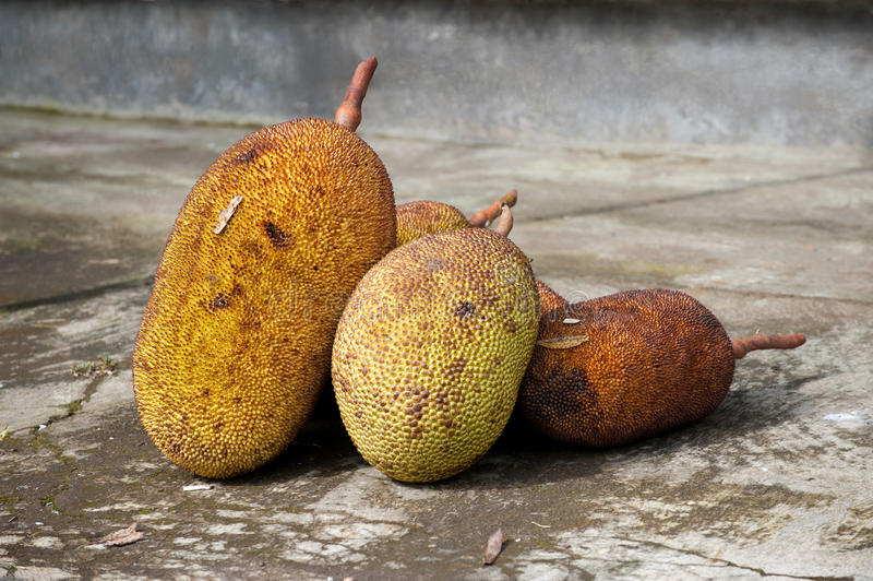 Download Jack-fruits at the street stock image. Image of concept - 23004035