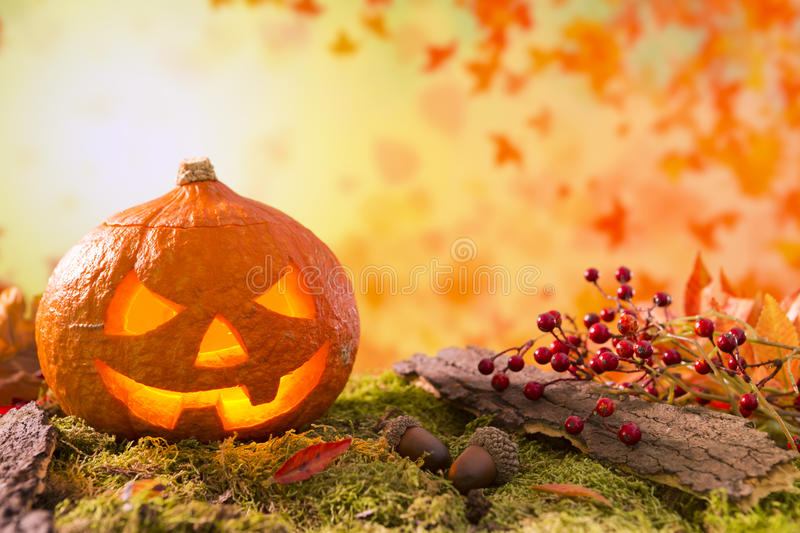 Jack O& x27;Lantern in an autumn nature still life royalty free stock image