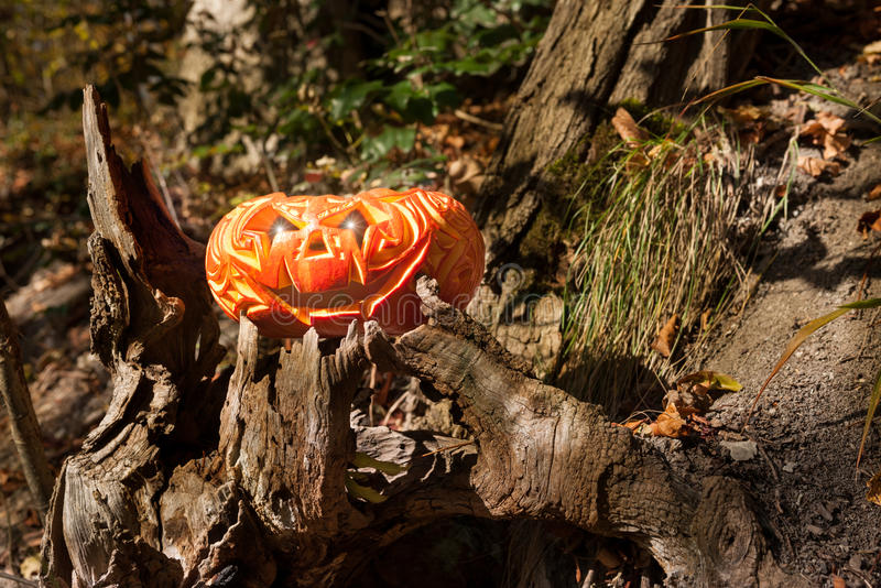 Download Jack o'Lantern in a forest stock photo. Image of autumn - 31503348