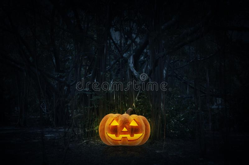 Jack O Lantern pumpkin on grass over spooky forest at night time stock photo