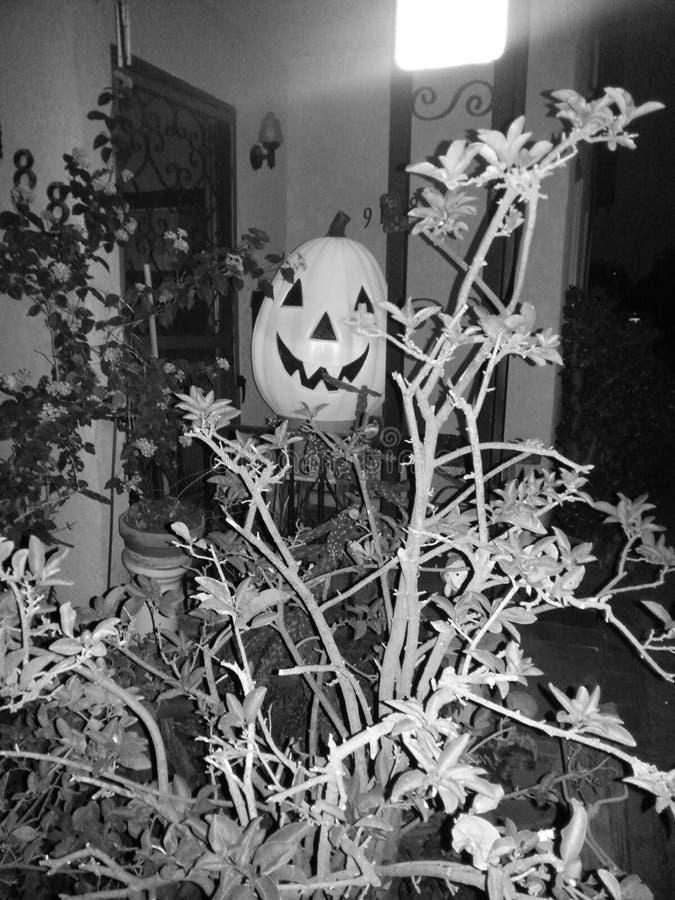 Jack-o'lantern in Schwarzem u. in weißem stockbilder
