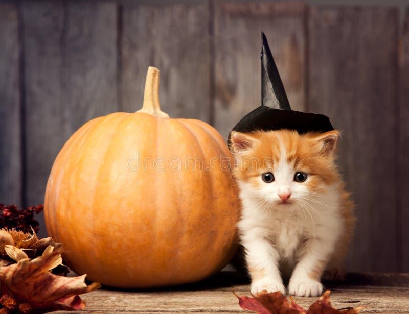 Jack-o-linterna de la calabaza de Halloween y gatito del jengibre en la madera negra imagenes de archivo