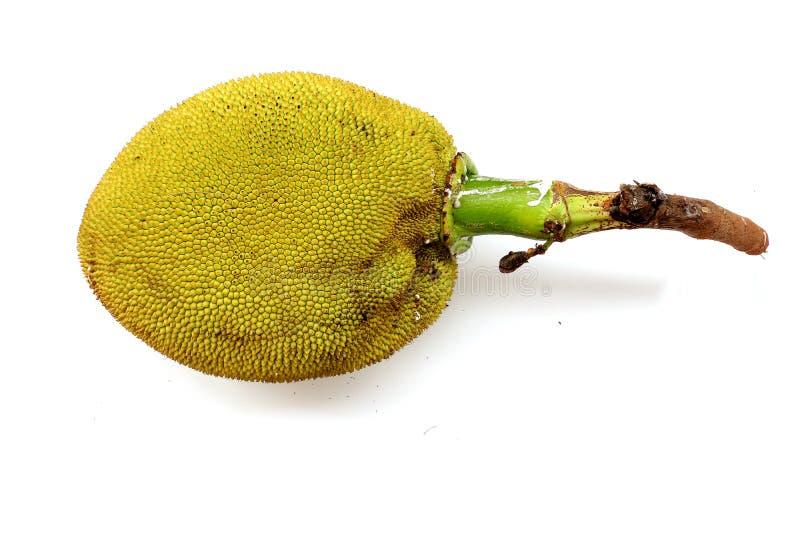 Jack owoc z liściem odizolowywającym na białym tle zdjęcia royalty free