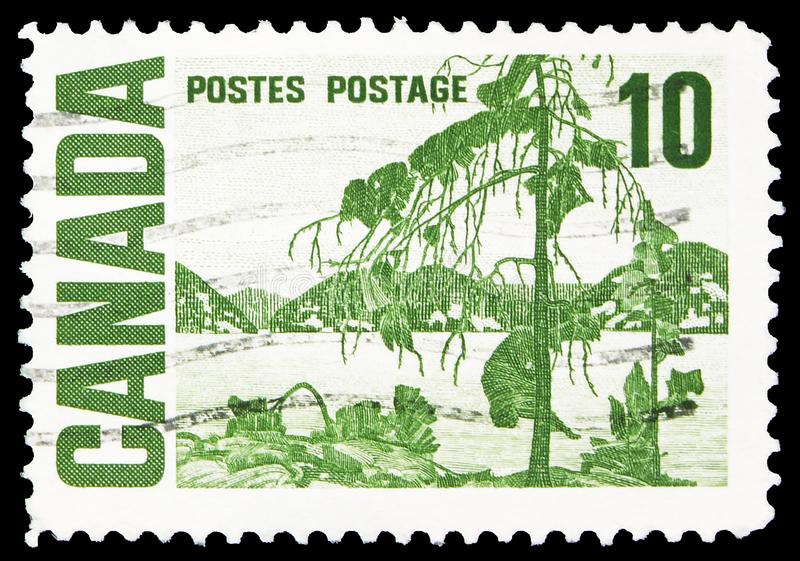 Jack Pine by Thomas John Thomson, Centennial Definitives 1967-1973 - High Values serie, circa 1968. MOSCOW, RUSSIA - SEPTEMBER 22, 2019: Postage stamp printed in royalty free stock image