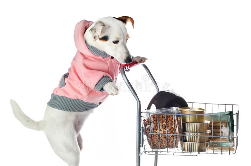 Jack Russell dog pushing a shopping cart full of food. On white background stock photos