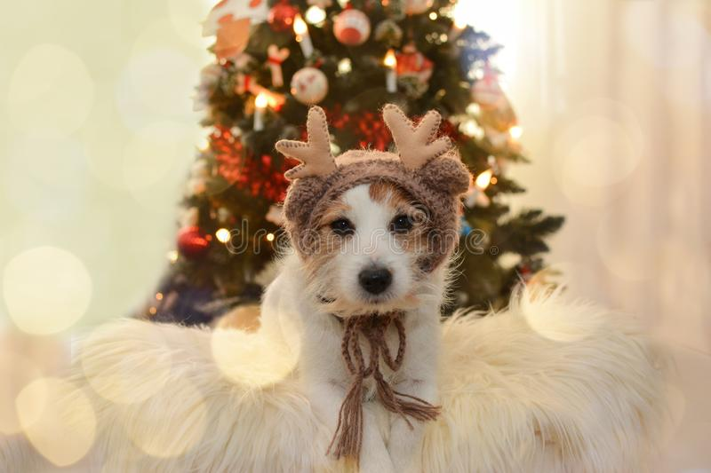 JACK RUSSELL DOG IN REINDEER COSTUME HAT . CHRISTMAS LIGHTS TREE. CUTE JACK RUSSELL DOG IN REINDEER COSTUME HAT . CHRISTMAS LIGHTS TREE BACKGROUND stock photography