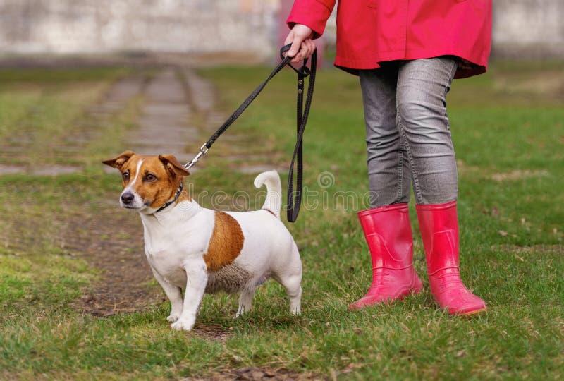 Jack Russell hond en meisje die in rode laarzen in de lentepark lopen stock foto's