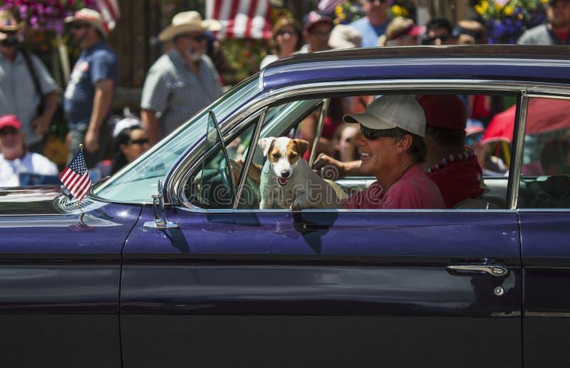 Jack Russell pies wiesza w nadokiennym Lipu 4, dzień niepodległości parada, Telluride, Kolorado, usa zdjęcia stock