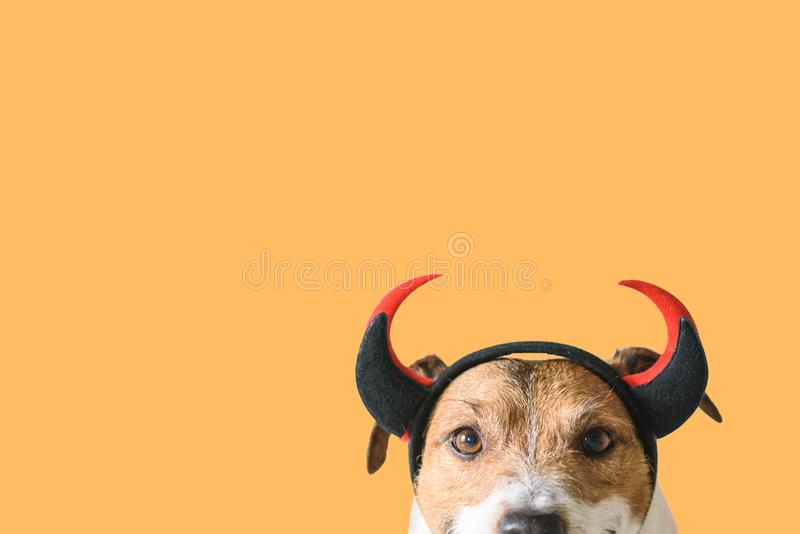 Dog wearing devilish horns as funny Halloween outfit. Jack Russell Terrier against color background wearing Halloween hat royalty free stock photos