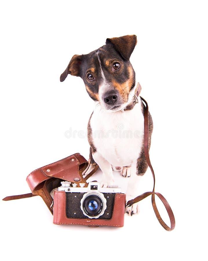 Jack Russell Terrier con una cámara en un fondo blanco fotografía de archivo libre de regalías