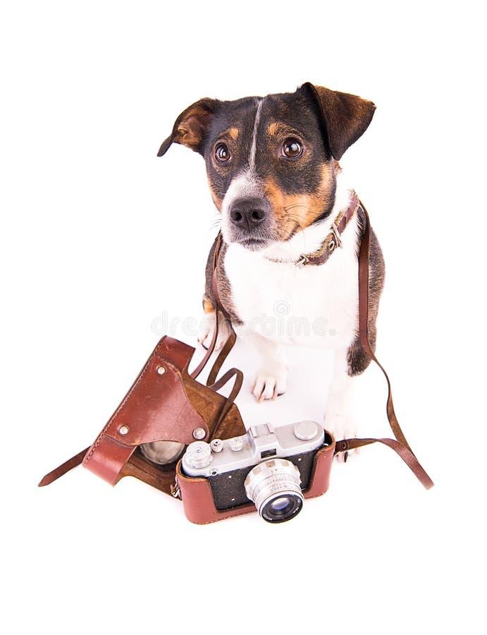 Jack Russell Terrier con una cámara en un fondo blanco fotografía de archivo