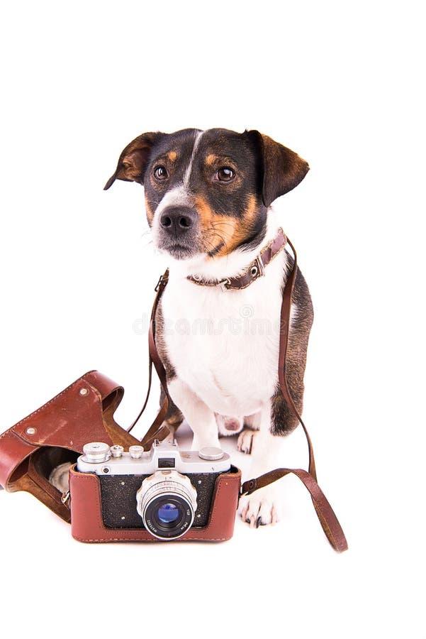 Jack Russell Terrier con una cámara en un fondo blanco imágenes de archivo libres de regalías