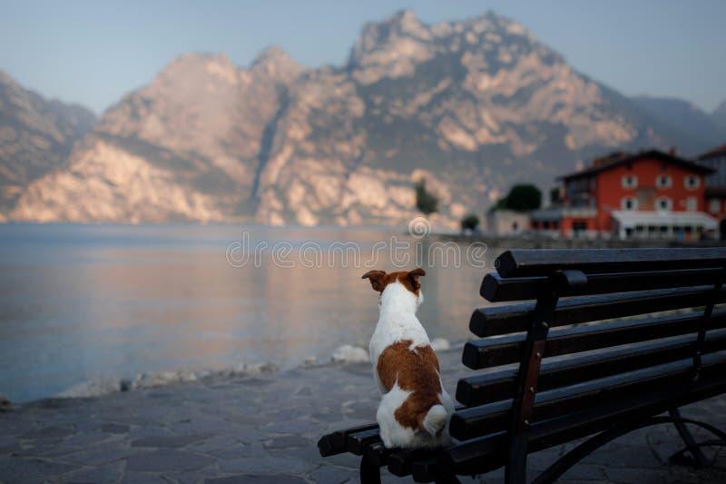 Jack Russell Terrier am See in den Bergen Feiertag mit Ihrem Haustier Reisen mit einem Hund nach Italien stockfotos