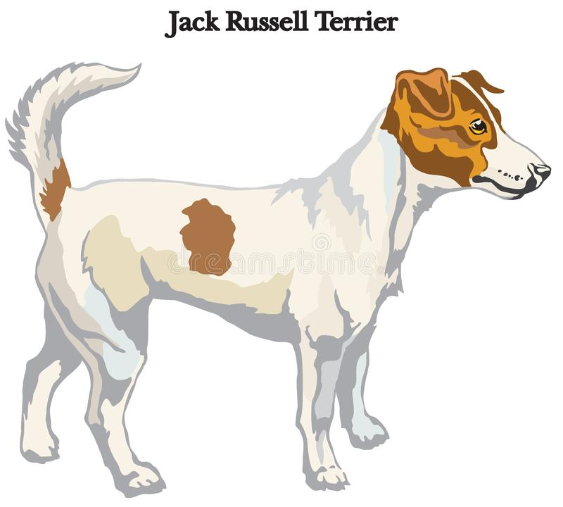 Free Jack Russell Terrier Vector Illustration Stock Photos - 104130673