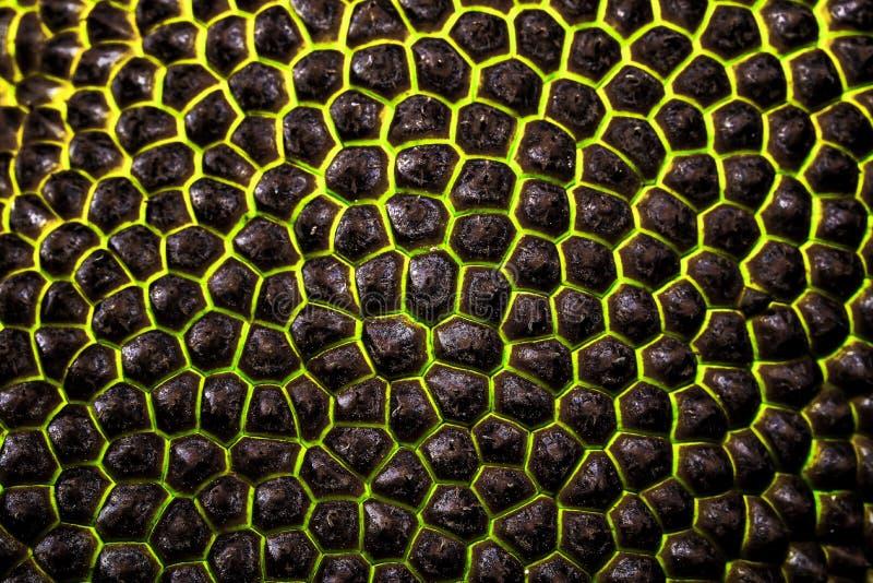 Jackfruit stock foto
