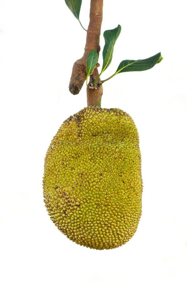 Download Jackfruit Royalty Free Stock Photo - Image: 22858165