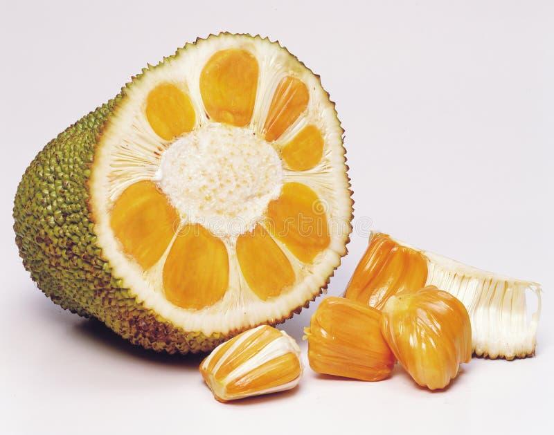 Download Jackfruit stock photo. Image of fruit, jackfruit, nangka - 25265338