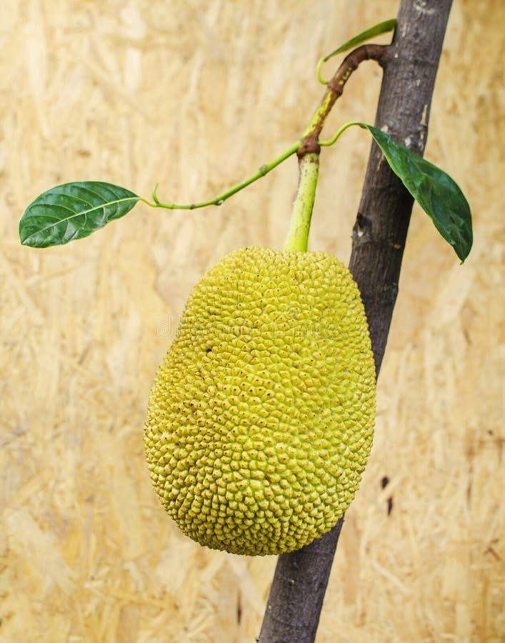 Jackfruit (Artocarpus heterophyllus) στο ξύλινο υπόβαθρο στοκ εικόνες με δικαίωμα ελεύθερης χρήσης