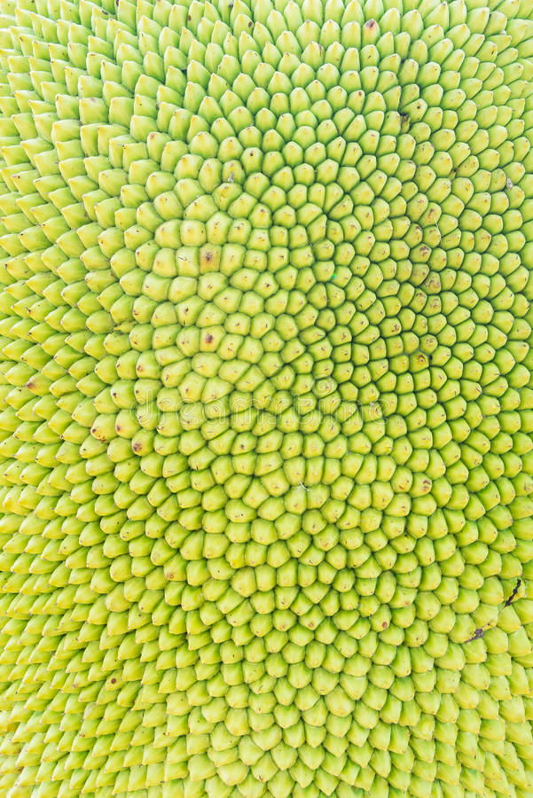 Jackfruit background or texture stock image