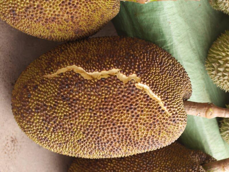 Jackfruit Bladożółty Kłaść puszek, rodzaj Obdzierający Pięknie zdjęcia stock