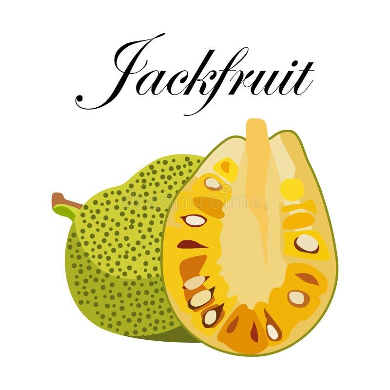 Jackfruit, ejemplo del vector Fruta exótica Estilo a mano ilustración del vector