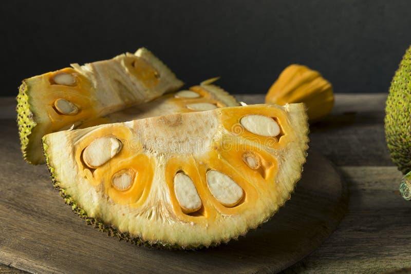 Jackfruit fresco orgânico caseiro fotos de stock