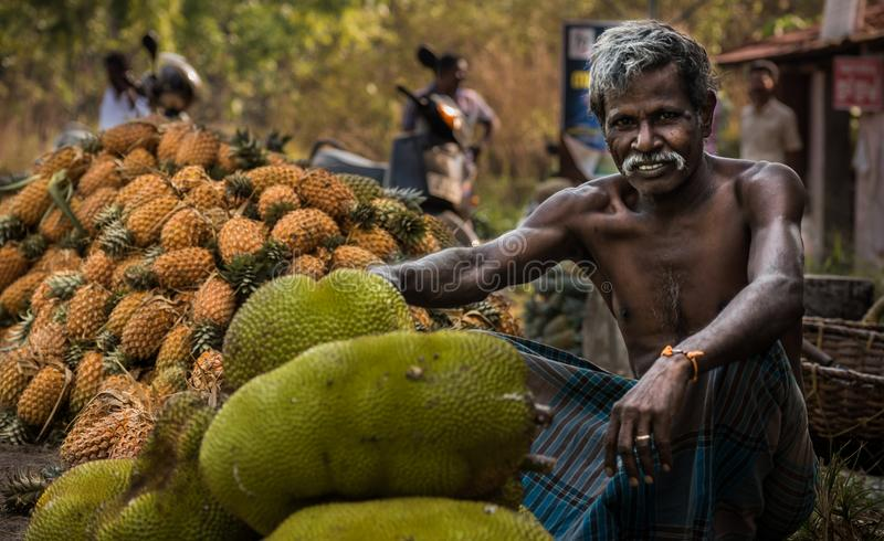 Jackfruit que cosecha en Kerala imagenes de archivo