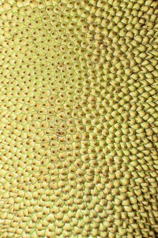 Jackfruit también conocido como fruta de Jaca en el Brasil fotos de archivo libres de regalías