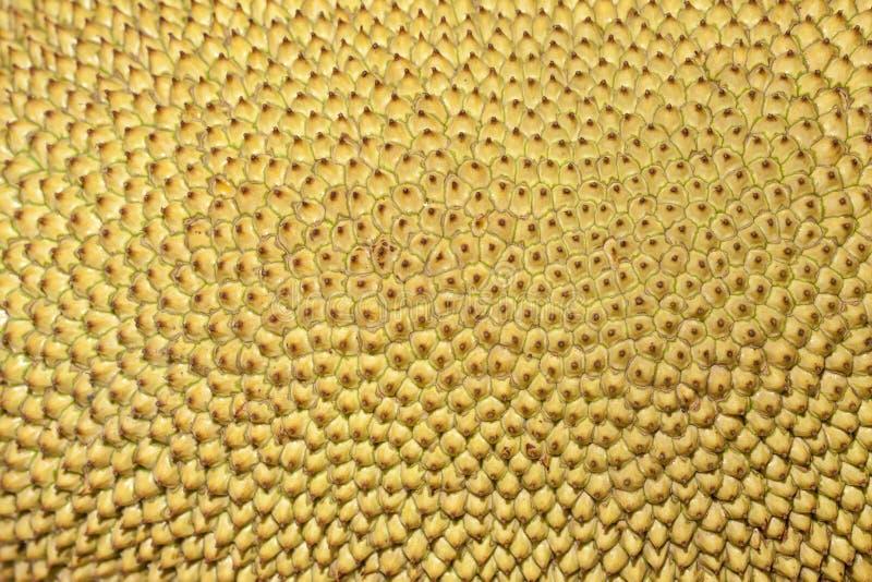 Jackfruit también conocido como fruta de Jaca en el Brasil fotografía de archivo