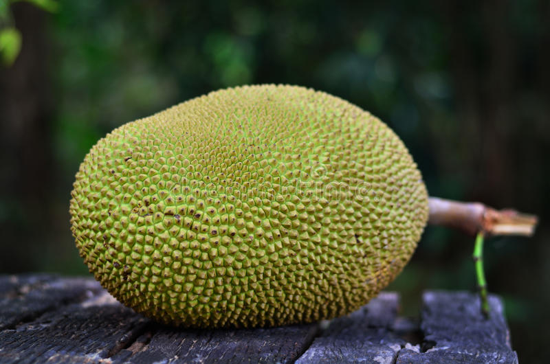 Jackfruit on wood background (Artocarpus heterophyllus) royalty free stock photography