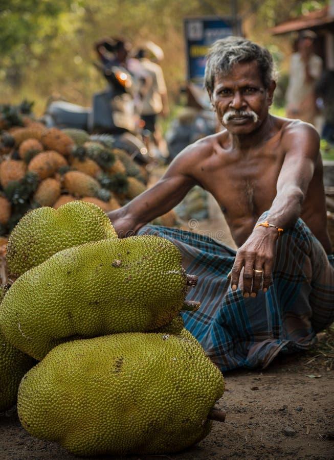 Jackfruitplockning i kerala royaltyfri bild