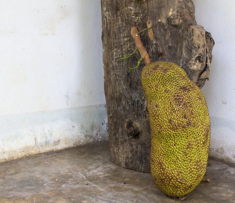 Download Jackfruits beside stock photo. Image of growth, organic - 28300886