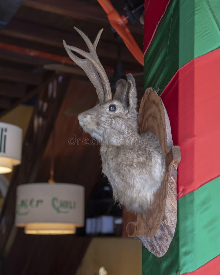 Jackrabbit med hjorthorn som skapades av uppstoppning och väggen, monterade på en kolonn i den gröna Chili Restaurant, Hoi An royaltyfria bilder