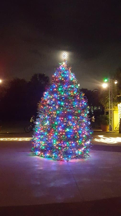 Jacksonville, Florida Zoo Christmas Tree stock photos