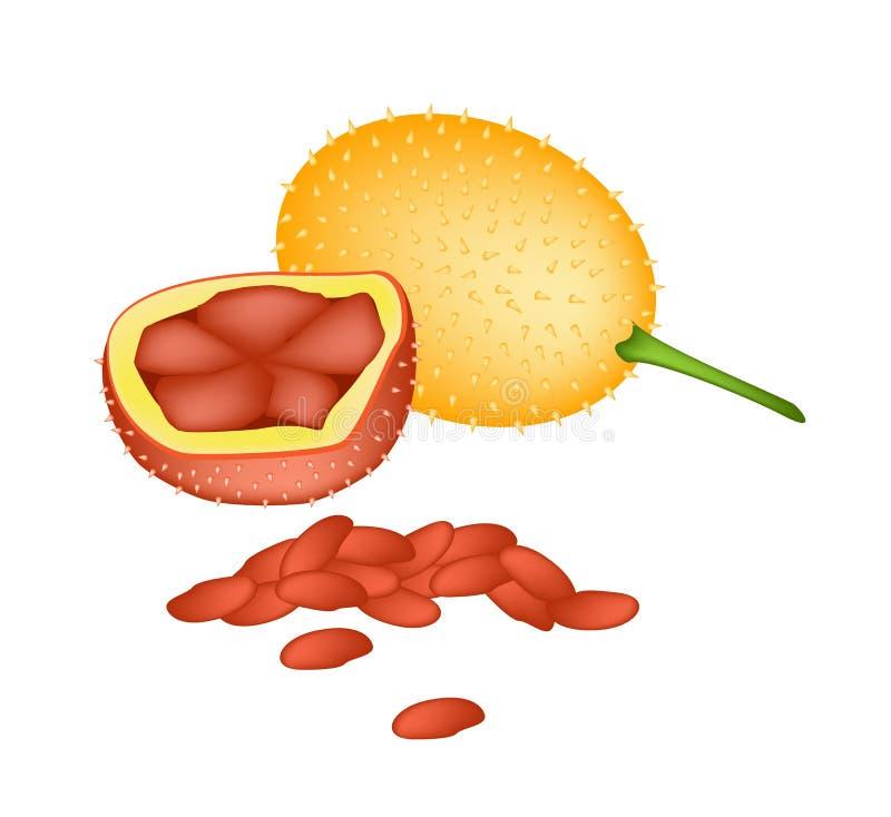 Jacquiers oranges frais de bébé sur le fond blanc illustration de vecteur