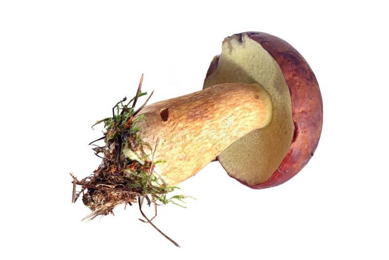 jadalna grzybek zdjęcie royalty free