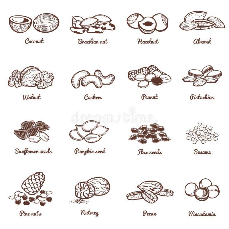 Jadalnych dokrętek i ziaren wektoru ikony Proteinowy zdrowy jedzenie set ilustracja wektor