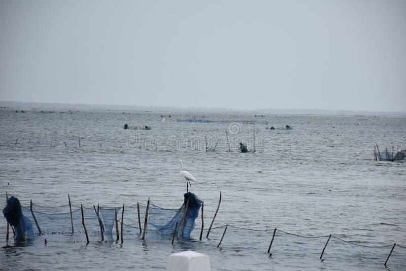 Jaffna Fishering royalty free stock photos