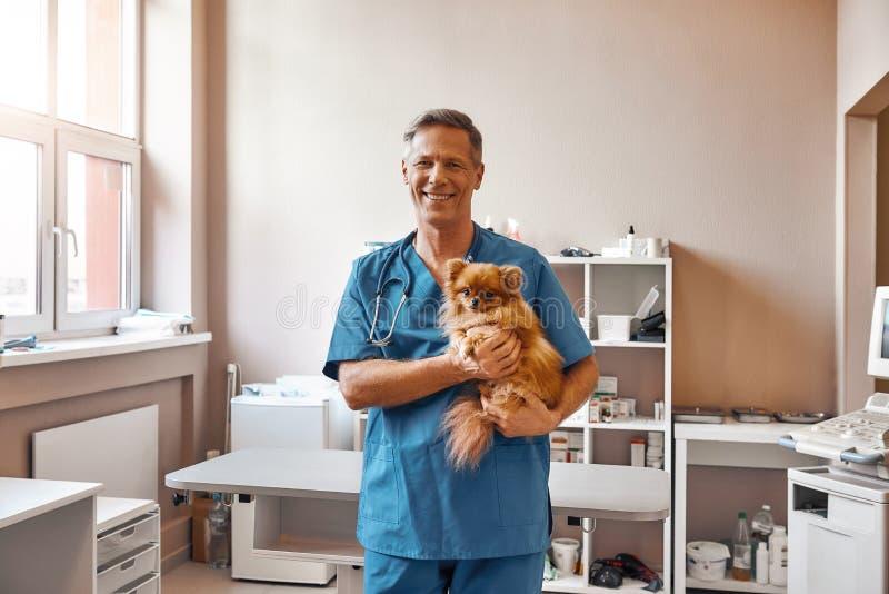 Jag älskar mina patienter! Den gladlynta manliga veterinären i arbetslikformig rymmer den lilla gulliga hunden och ler på kameran royaltyfria foton