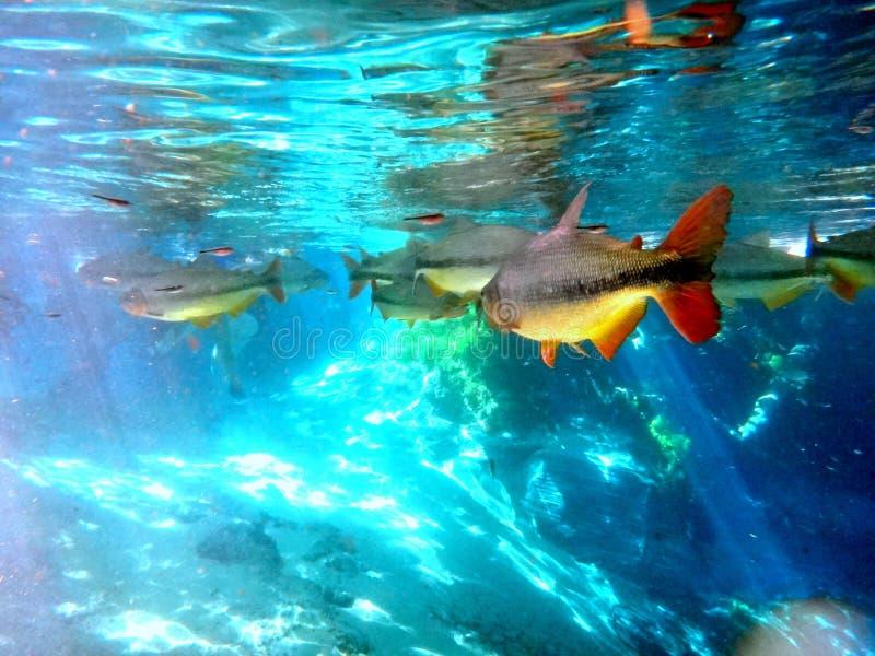 Jag försökte att finna Nemo arkivfoton