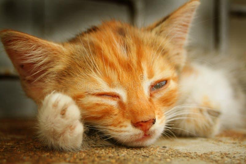Download Jag ser dig arkivfoto. Bild av katt, makro, lampa, sorgsenhet - 290066