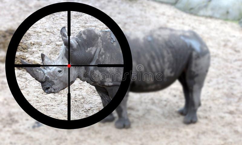 Jaga en vit noshörning arkivfoto